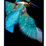AQUOS PHONE Xx 302SHのスクリーンショットを撮る方法を紹介