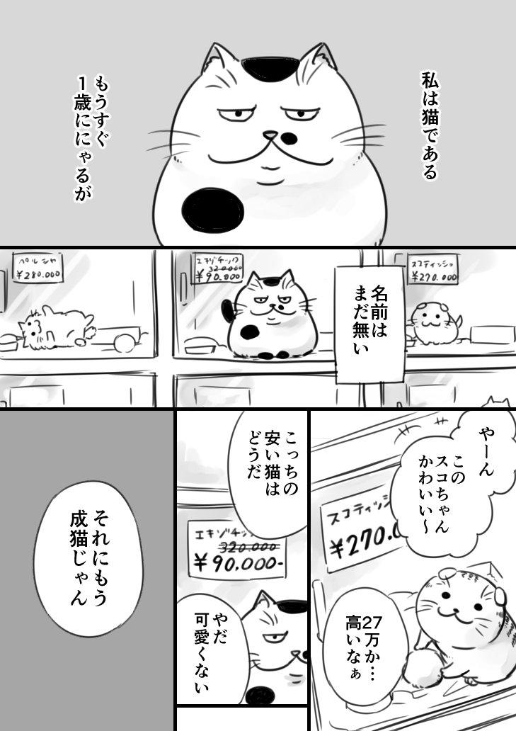 sakurai_umi__2017-6月-12