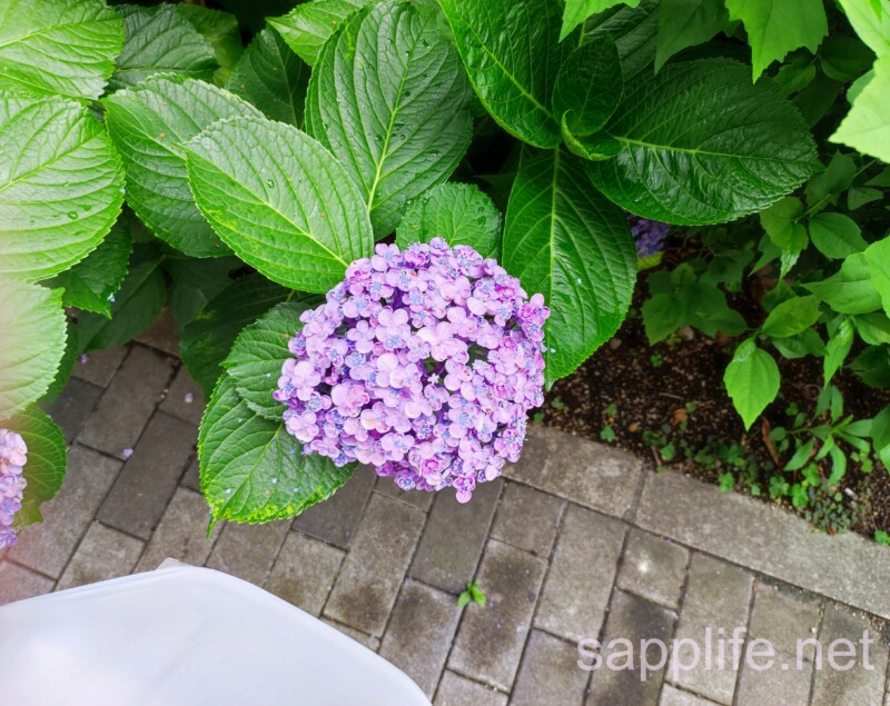 Mi 11 Lite 5Gのカメラで撮影したサンプル画像5